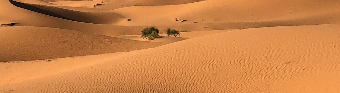 green-grasses-on-sahara-desert-1001435 1