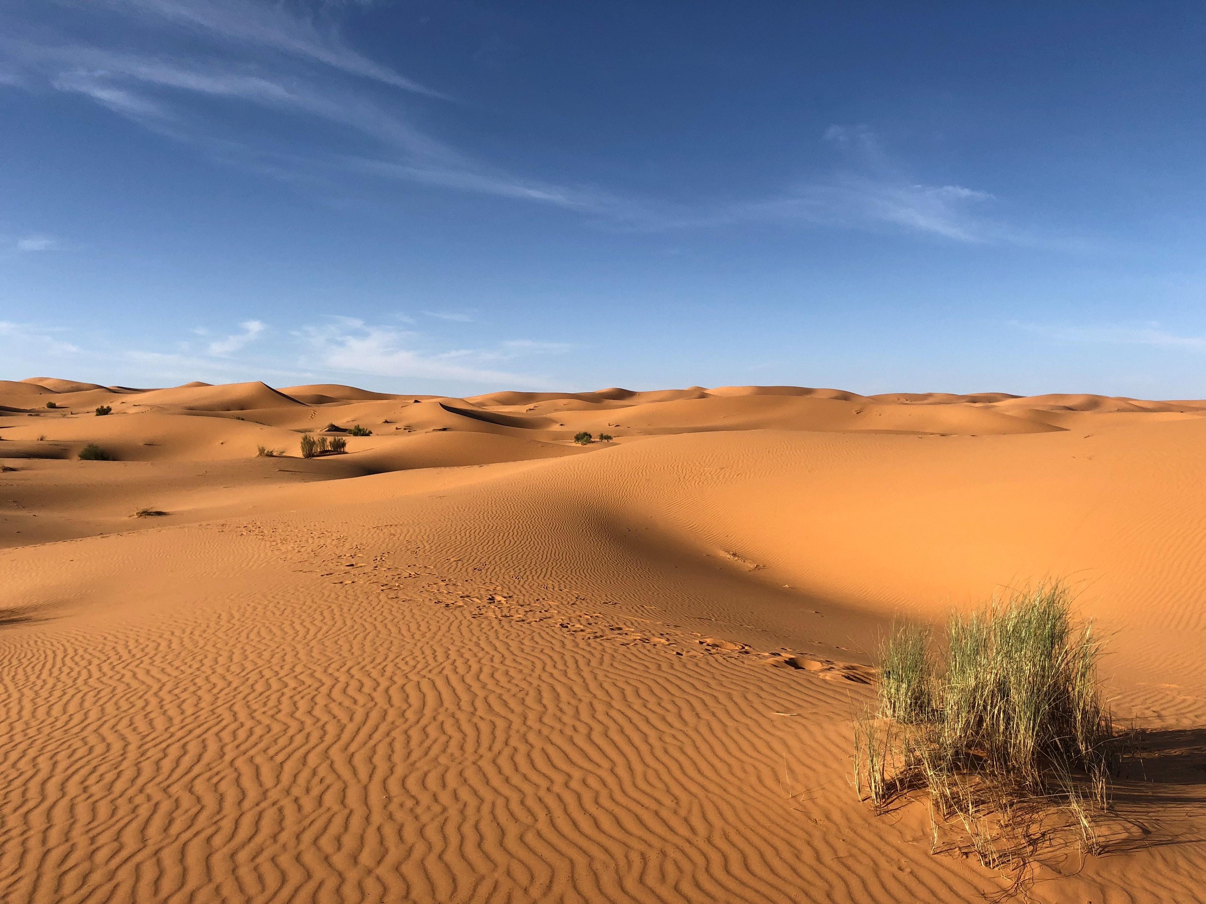 green-grasses-on-sahara-desert-1001435